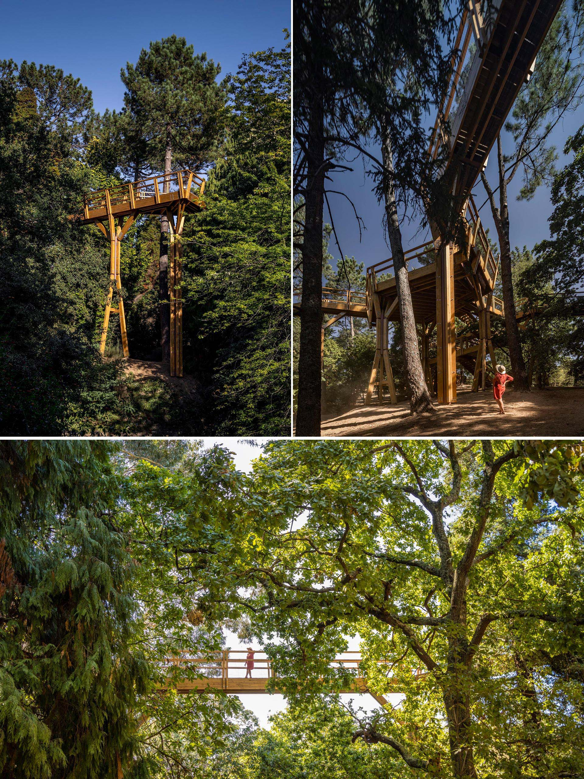 A treetop canopy walk in Portugal gives visitors a unique view.