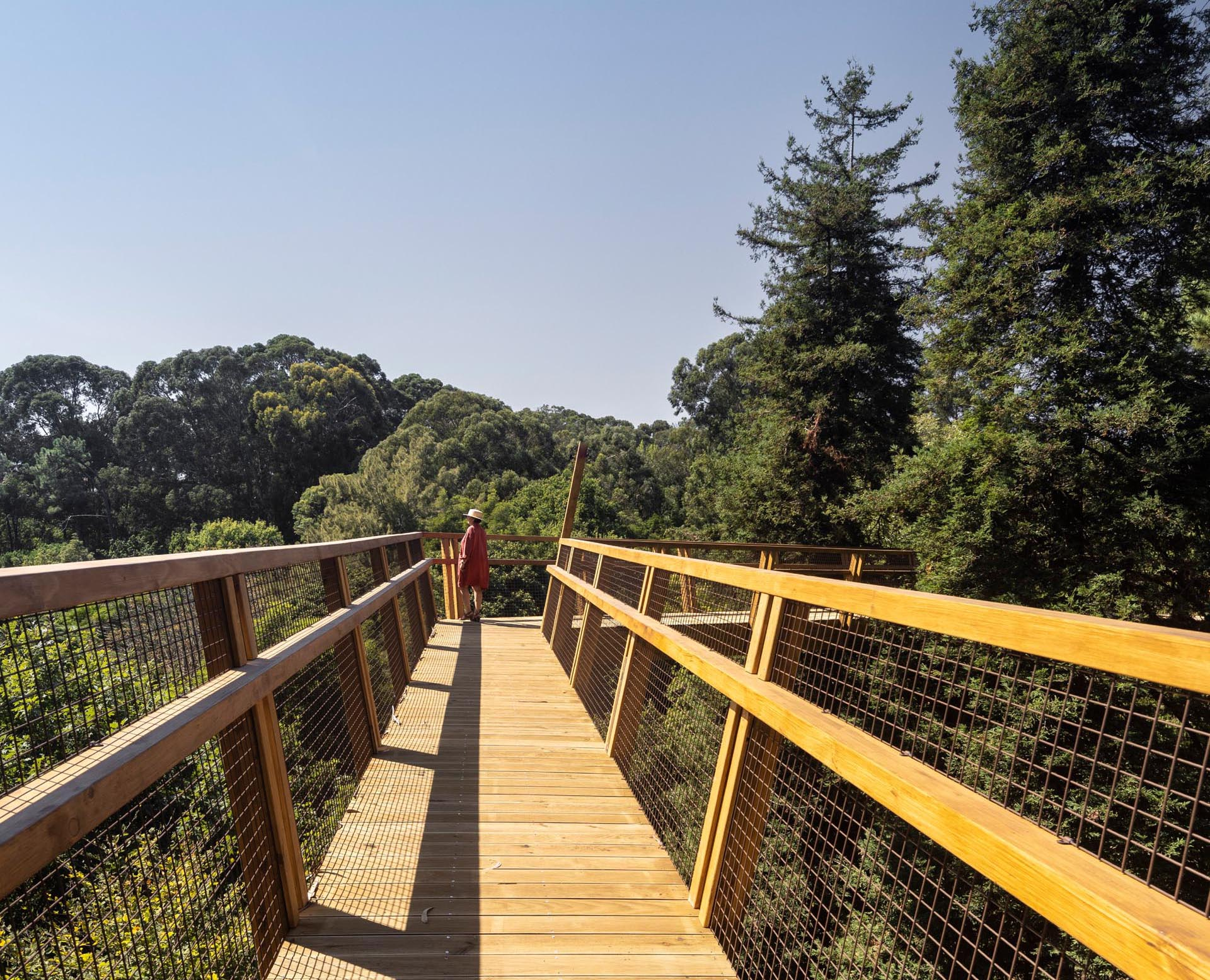 A raised wood walkway weaves through the treetops of a park in Portugal.