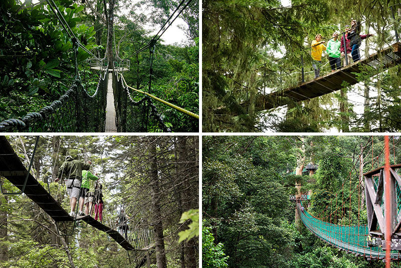 11 Tree Top Walks For Lovers Of Nature //