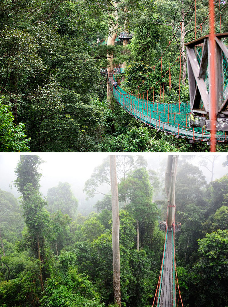 11 Tree Top Walks For Lovers Of Nature // The Danum Valley canopy walk in Borneo, Malaysia uses tree friendly engineering that allows the platforms to be adjusted as the tree grows and keeps cables out of the trees.
