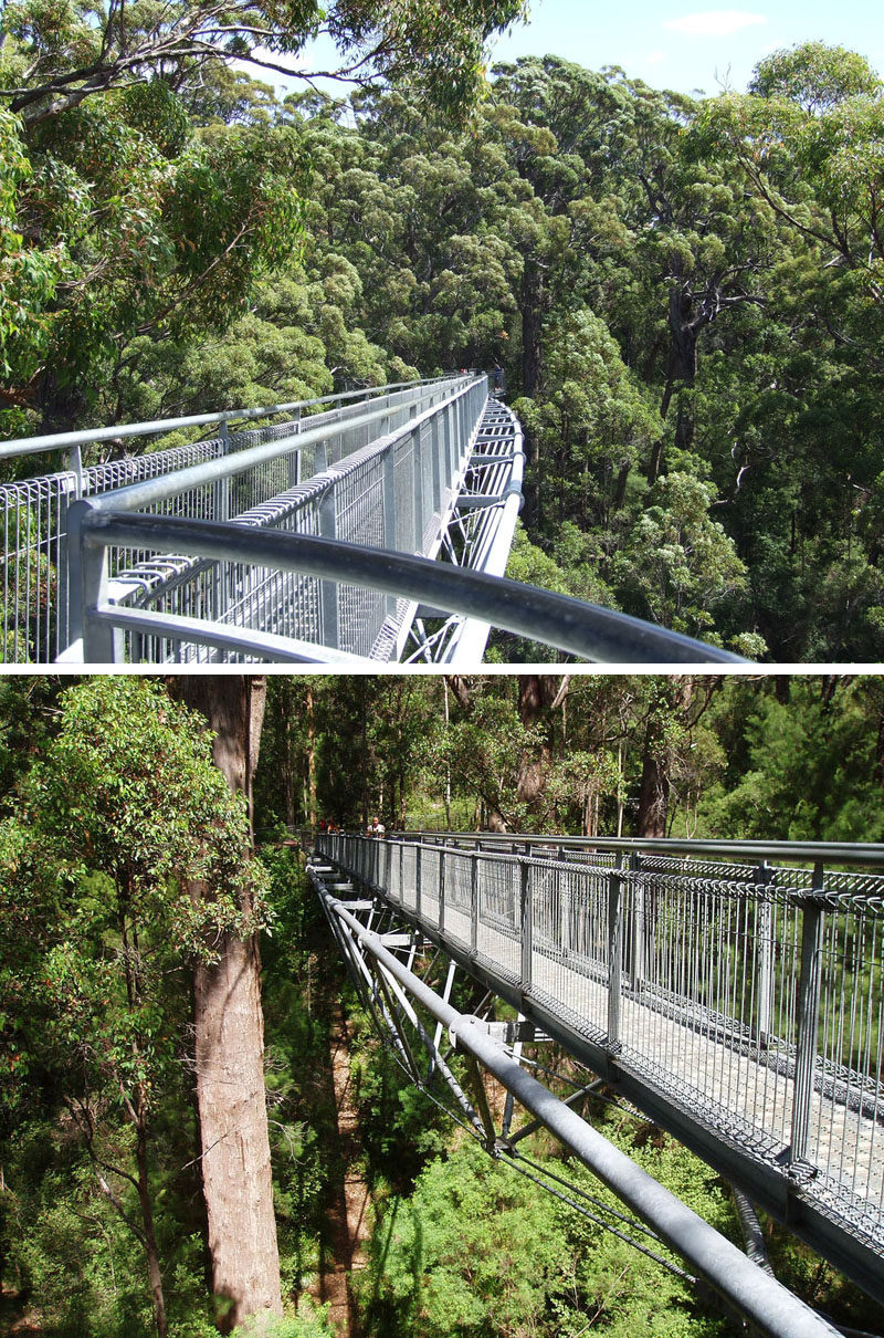 11 Tree Top Walks For Lovers Of Nature // Walk through the canopy of the Valley of the Giants at the Tree Top Walk in Denmark, Western Australia.
