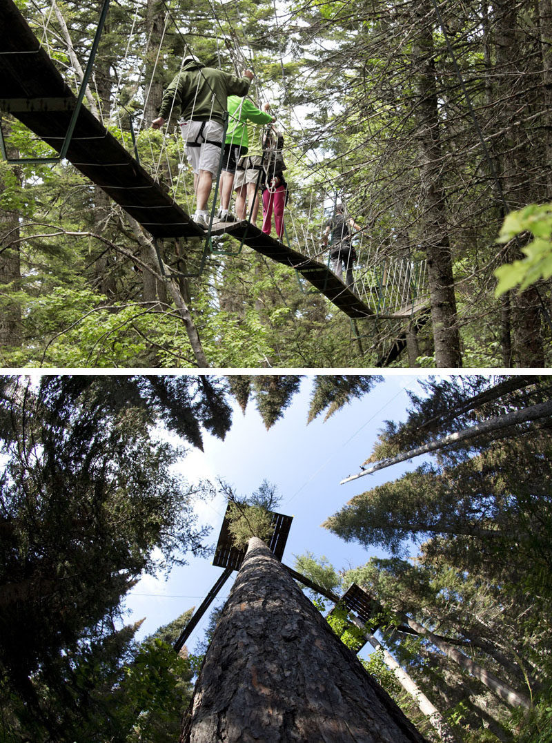 """11 Tree Top Walks For Lovers Of Nature // Take a """"Walk in the Treetops"""" at Whitefish Mountain Resort in Montana."""