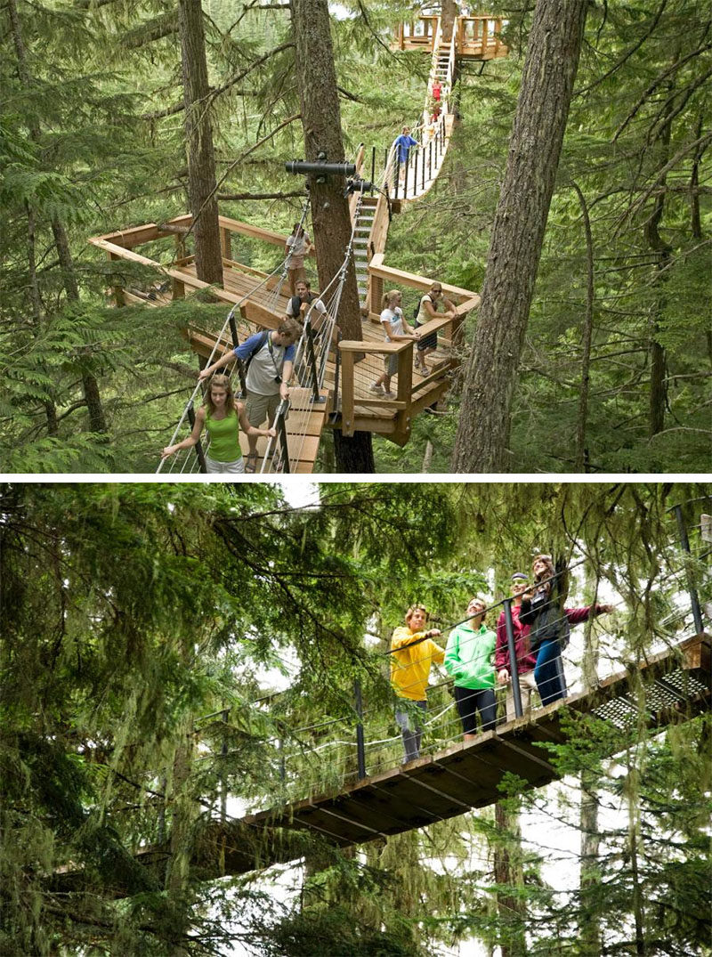 11 Tree Top Walks For Lovers Of Nature // Walk through the Cedar, Hemlock and Fir trees on the TreeTrek Tour in Whistler, Canada.